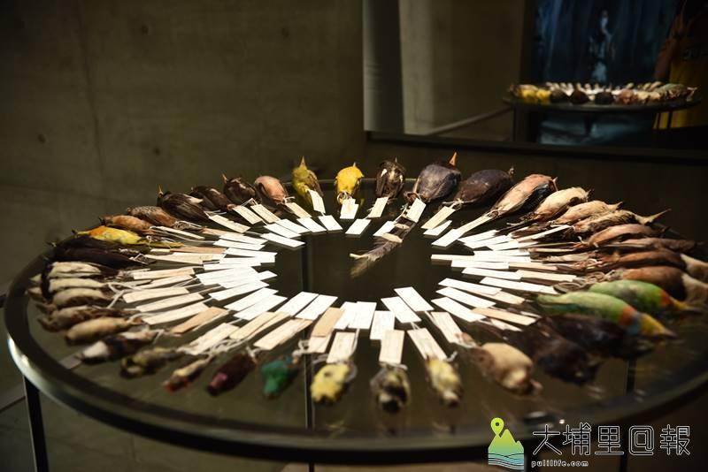 澳洲當代裝置藝術家珍奈特•勞倫絲作品《鳥曲》,材料來自台灣生物研究機構。(柏原祥 攝)