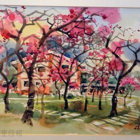 孫少英畫作《箱根櫻木花道》
